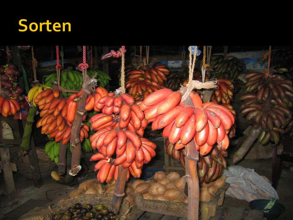 Sorten Kochbanane Textilbanane Obstbanane Apfelbanane Bananen mit Kern