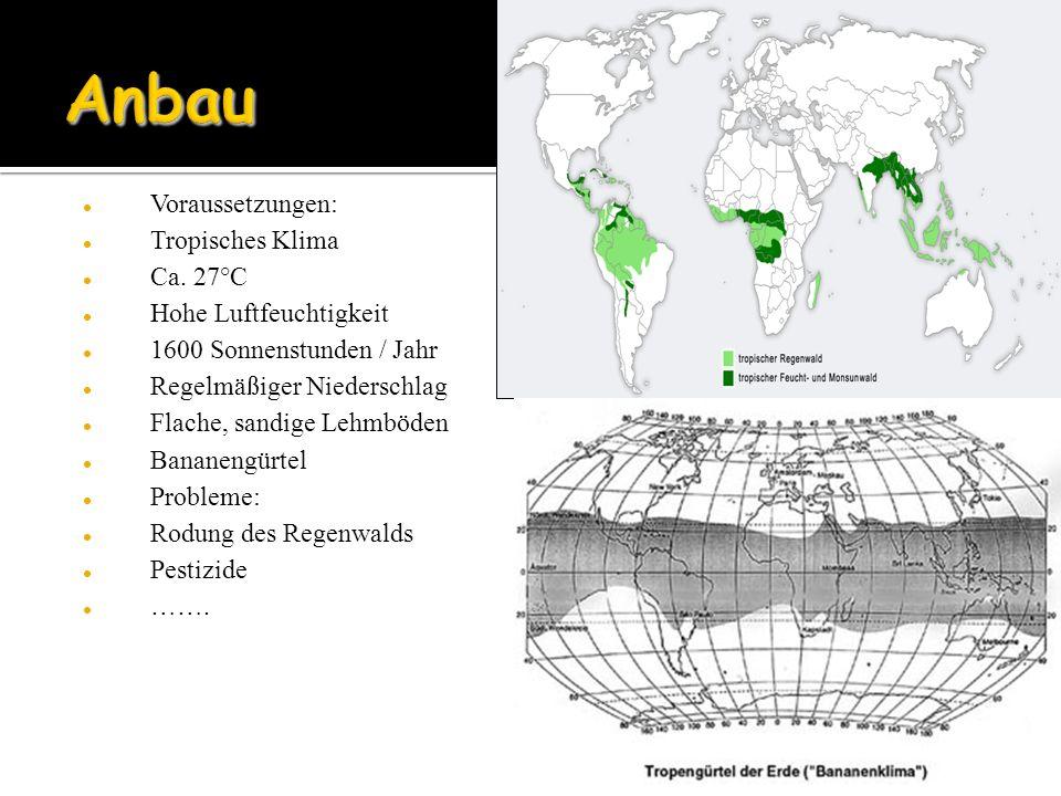 Anbau Voraussetzungen: Tropisches Klima Ca. 27°C Hohe Luftfeuchtigkeit