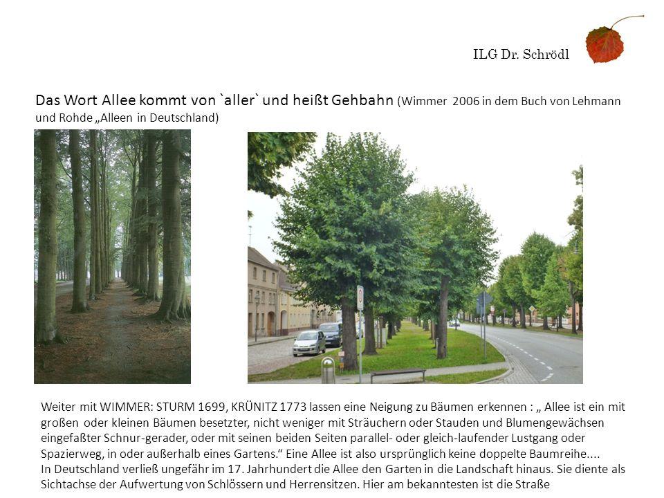 """ILG Dr. Schrödl Das Wort Allee kommt von `aller` und heißt Gehbahn (Wimmer 2006 in dem Buch von Lehmann und Rohde """"Alleen in Deutschland)"""