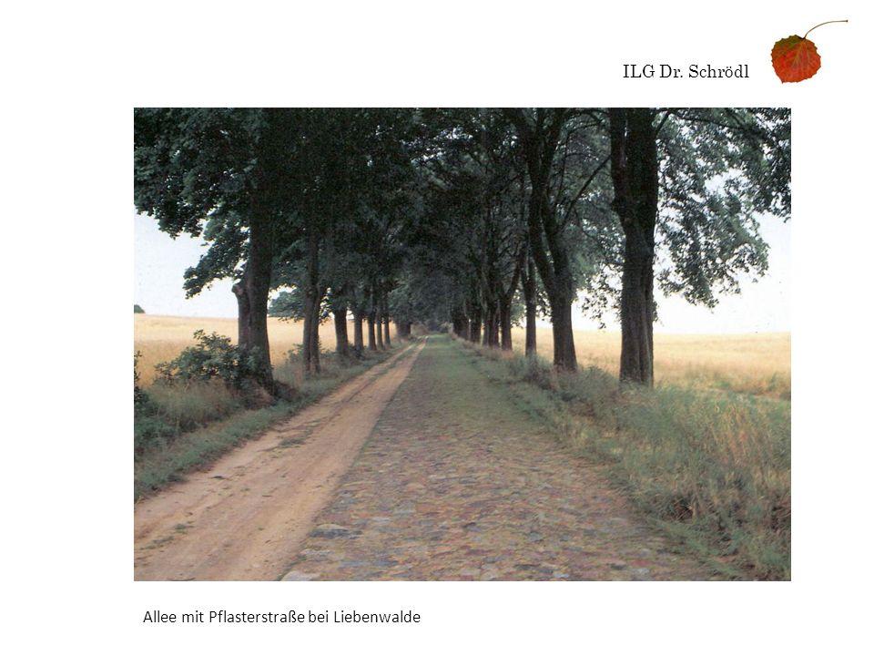 ILG Dr. Schrödl Allee mit Pflasterstraße bei Liebenwalde