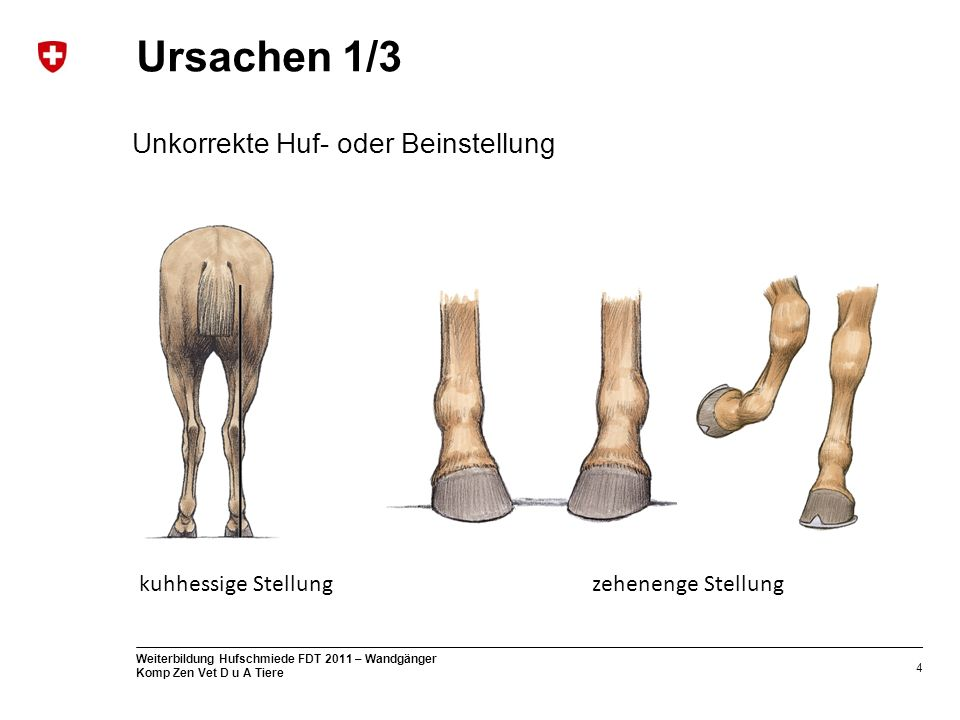 Ursachen 1/3 Unkorrekte Huf- oder Beinstellung