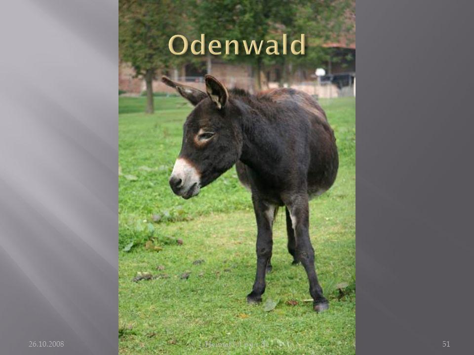 Odenwald Deswegen hat mich der Esel auch seines Blickes gewürdigt.