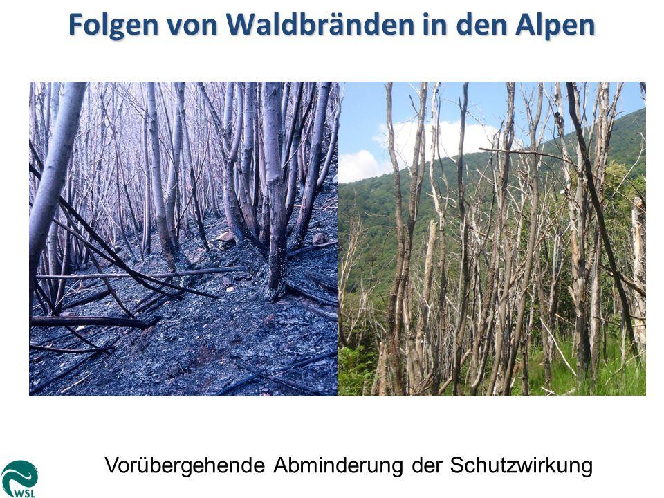 Folgen von Waldbränden in den Alpen
