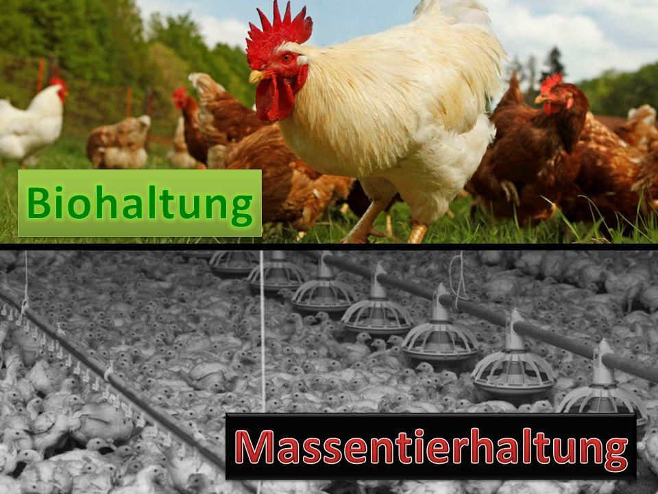 Biohaltung Massentierhaltung