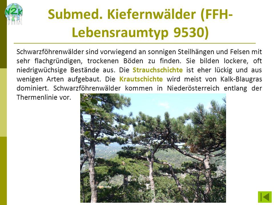 Submed. Kiefernwälder (FFH-Lebensraumtyp 9530)