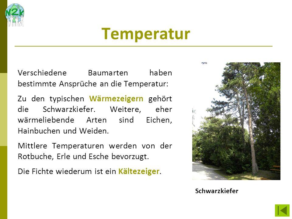 Temperatur Verschiedene Baumarten haben bestimmte Ansprüche an die Temperatur: