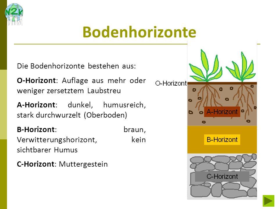 Bodenhorizonte Die Bodenhorizonte bestehen aus: