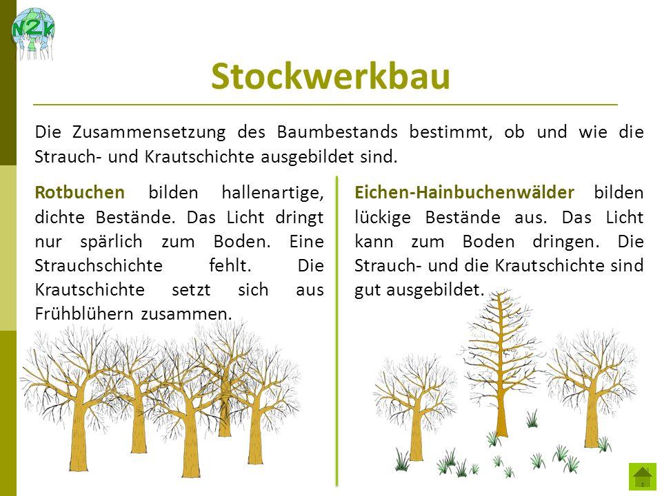 Stockwerkbau Die Zusammensetzung des Baumbestands bestimmt, ob und wie die Strauch- und Krautschichte ausgebildet sind.