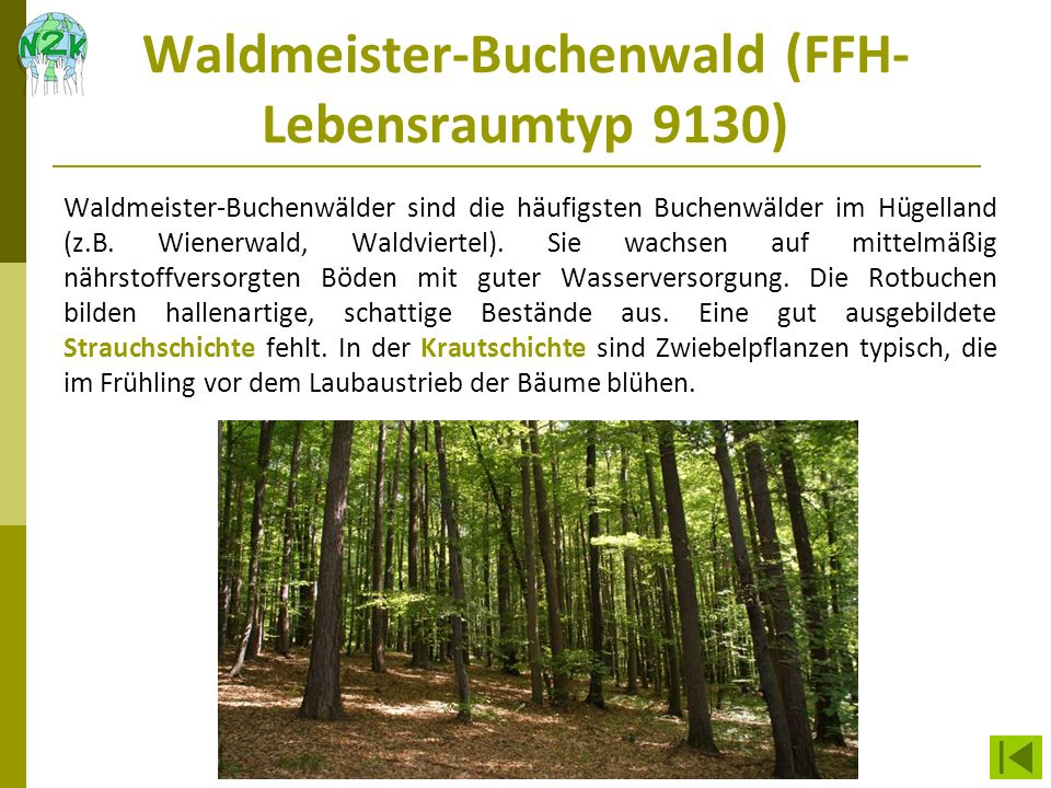 Waldmeister-Buchenwald (FFH-Lebensraumtyp 9130)