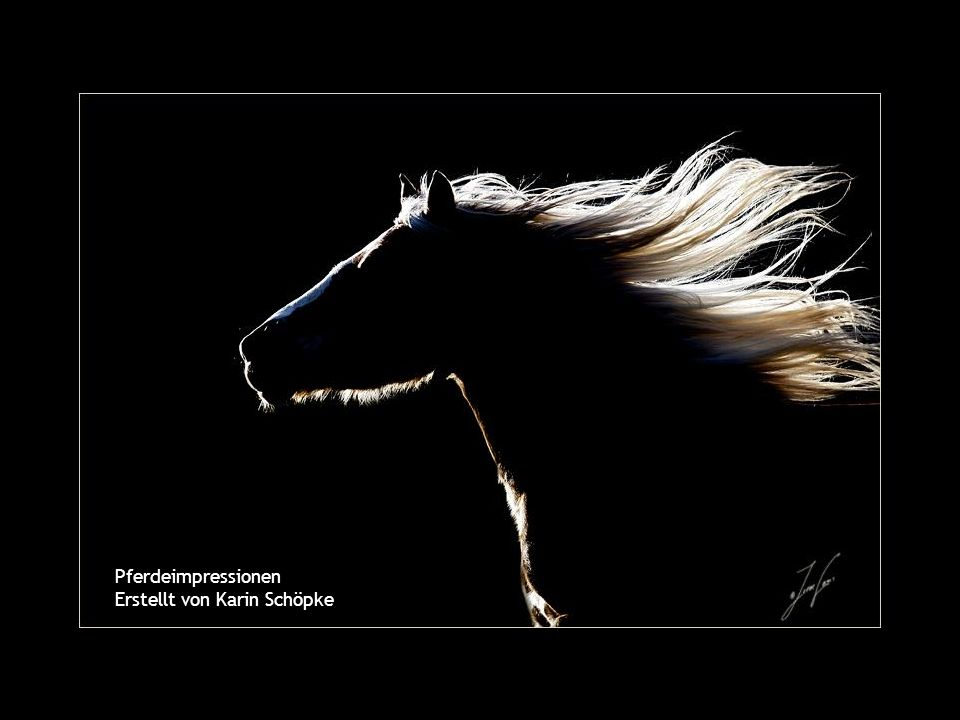 Pferdeimpressionen Erstellt von Karin Schöpke