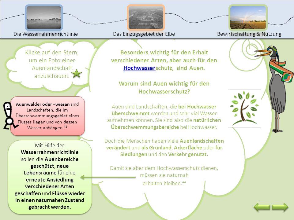 Warum sind Auen wichtig für den Hochwasserschutz