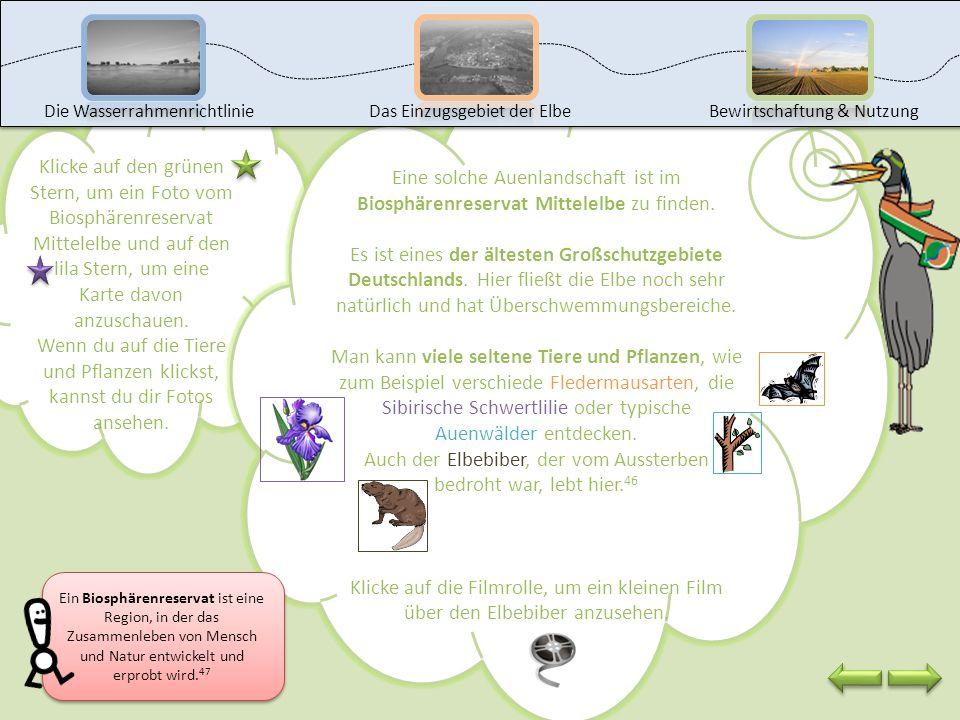 Auch der Elbebiber, der vom Aussterben bedroht war, lebt hier.46
