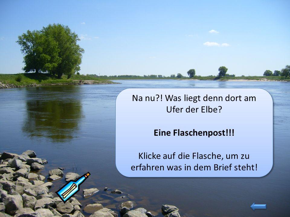 Na nu ! Was liegt denn dort am Ufer der Elbe