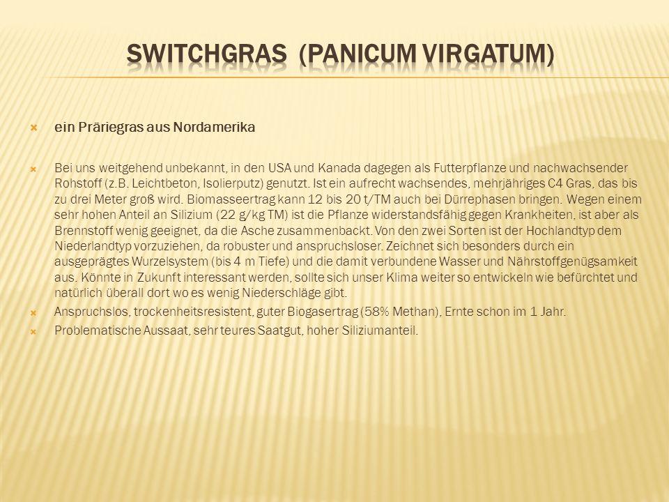 Switchgras (Panicum virgatum)