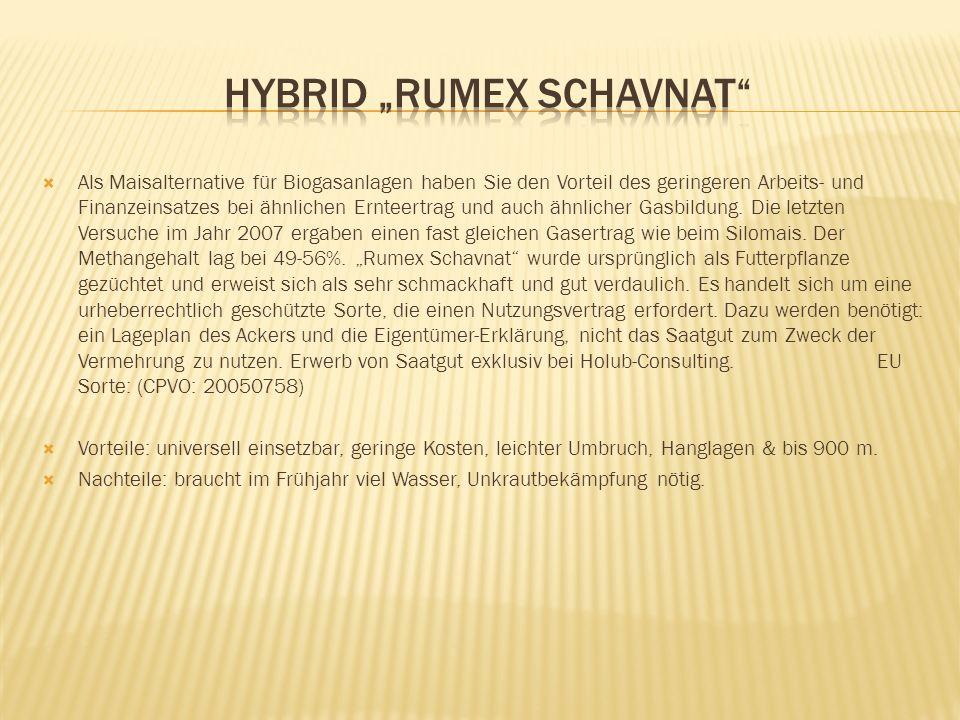"""Hybrid """"RUMEX Schavnat"""