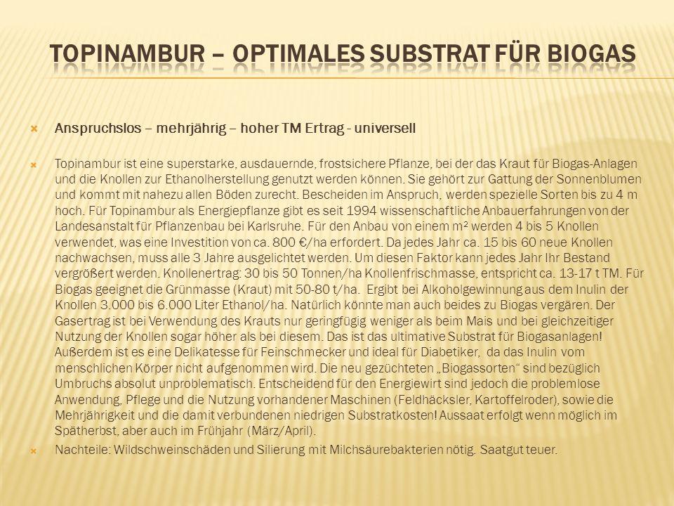 Topinambur – optimales Substrat für Biogas