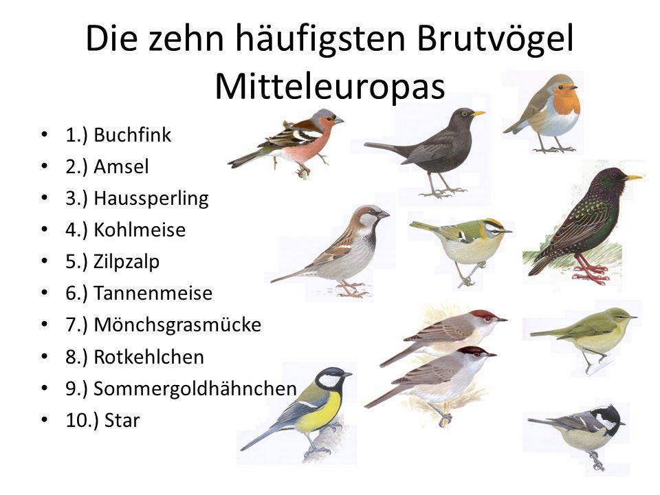 Die zehn häufigsten Brutvögel Mitteleuropas