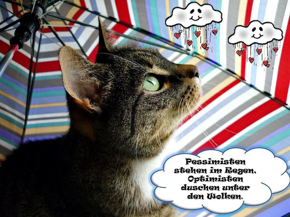 Pessimisten stehen im Regen, Optimisten duschen unter den Wolken.
