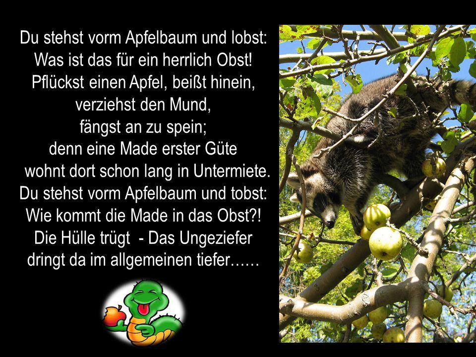 Du stehst vorm Apfelbaum und lobst: Was ist das für ein herrlich Obst!