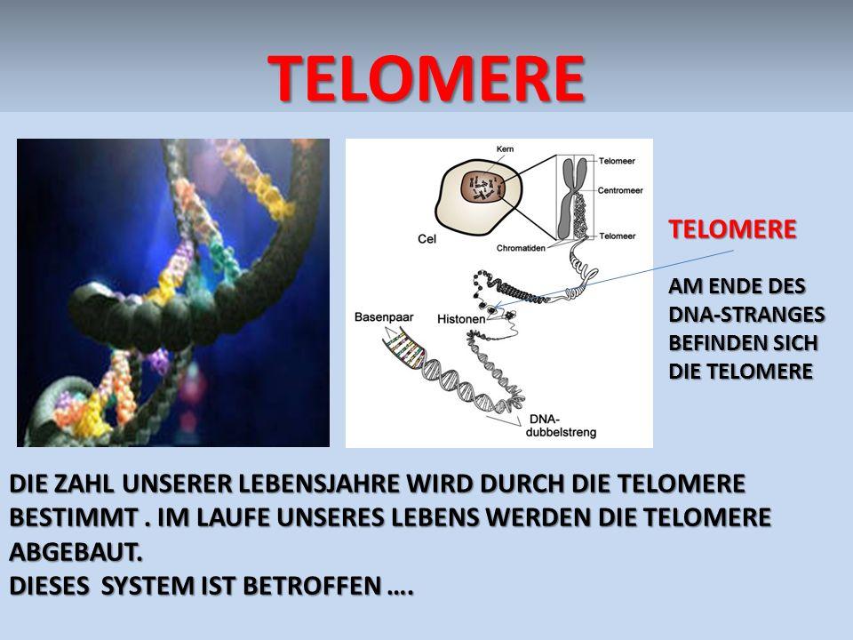 TELOMERE TELOMERE. AM ENDE DEs DNA-STRANGes befinden sich die TELOMERE.