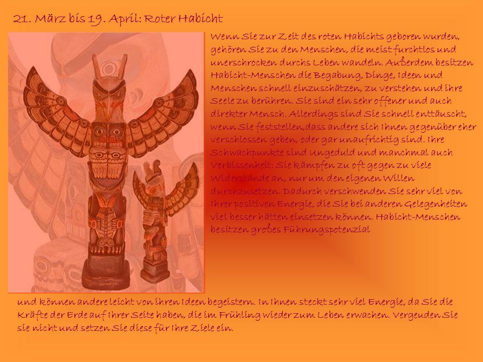 21. März bis 19. April: Roter Habicht