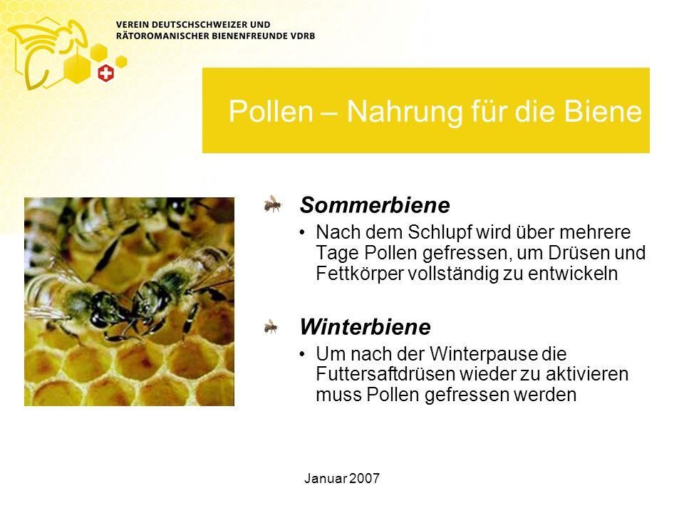 Pollen – Nahrung für die Biene