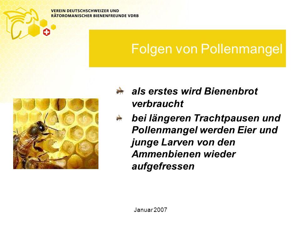 Folgen von Pollenmangel