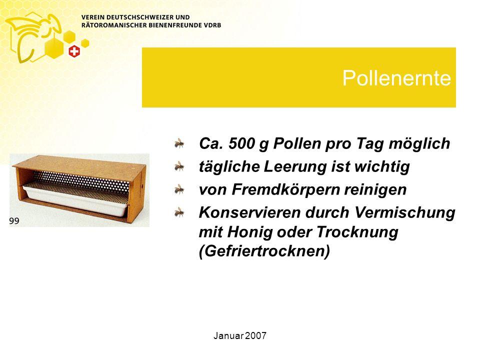 Pollenernte Ca. 500 g Pollen pro Tag möglich