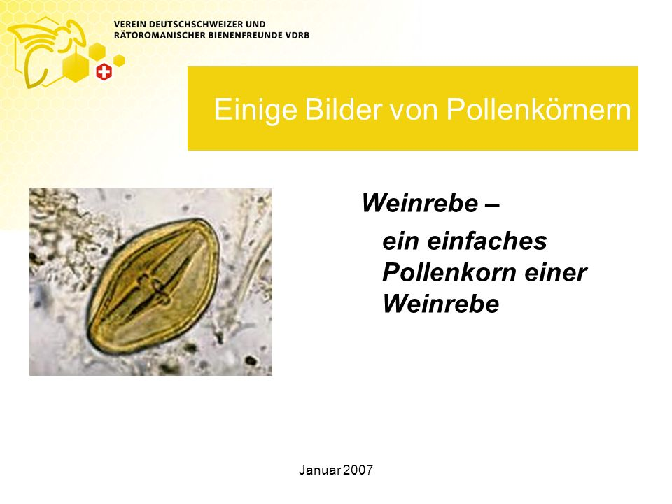 Einige Bilder von Pollenkörnern