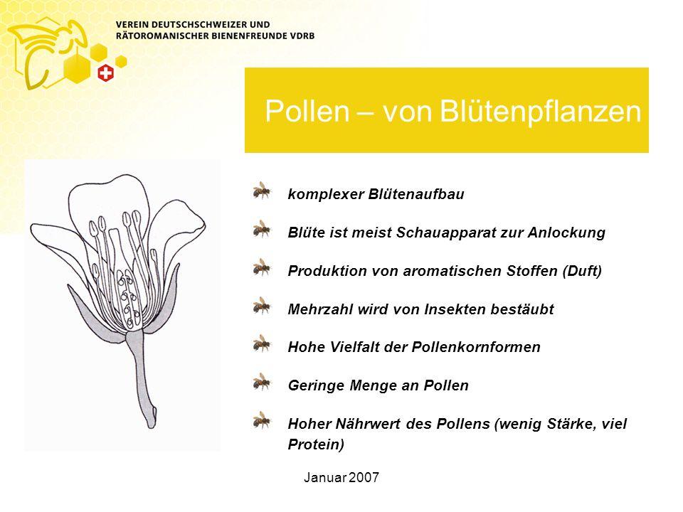 Pollen – von Blütenpflanzen