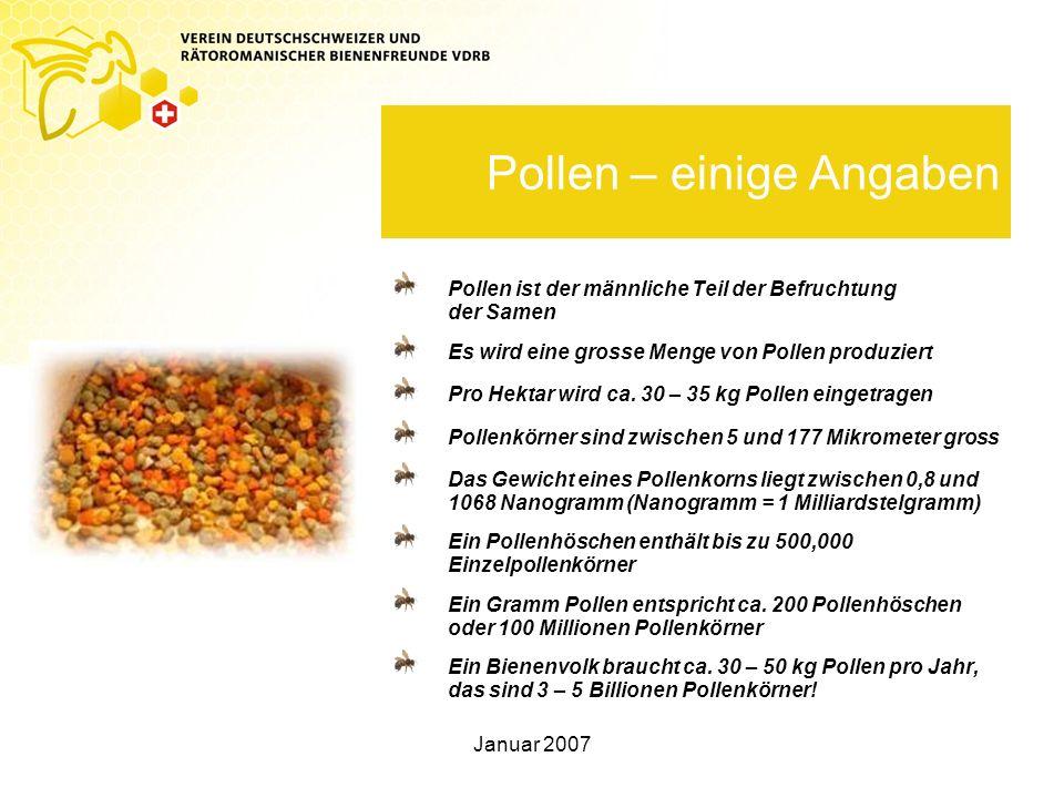 Pollen – einige Angaben