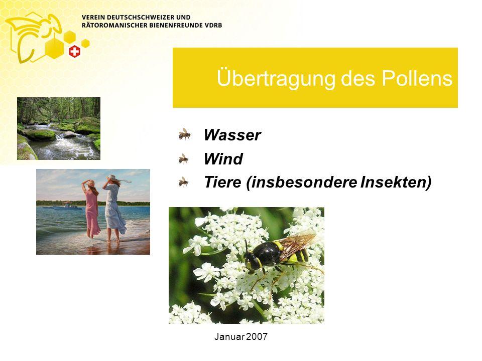 Übertragung des Pollens
