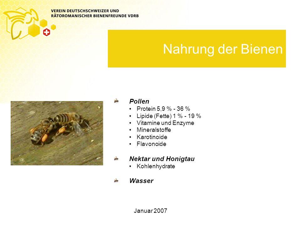 Nahrung der Bienen Pollen Nektar und Honigtau Wasser