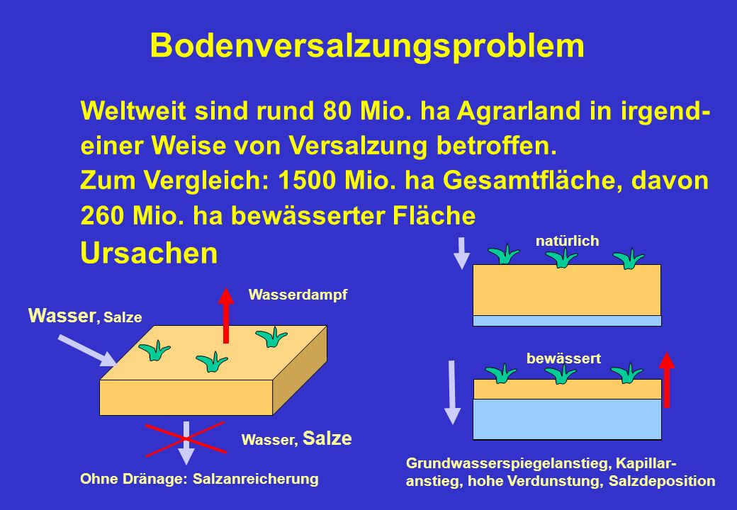 Bodenversalzungsproblem