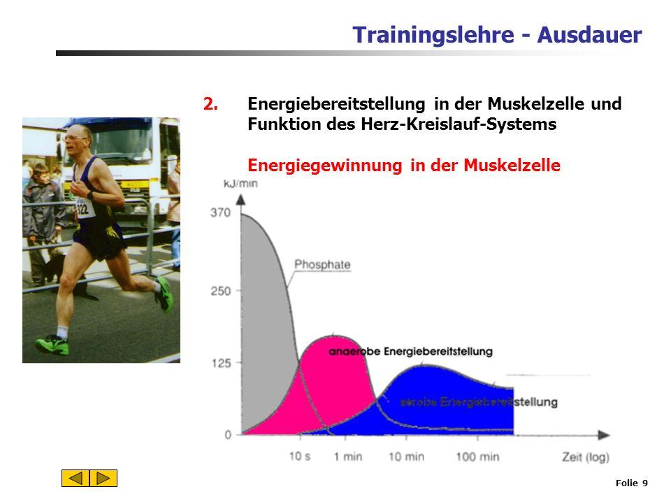 Energiebereitstellung in der Muskelzelle und Funktion des Herz-Kreislauf-Systems