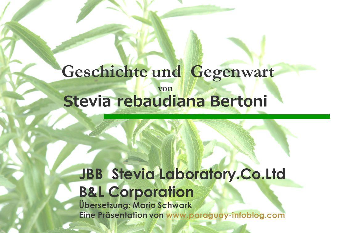 Geschichte und Gegenwart Stevia rebaudiana Bertoni