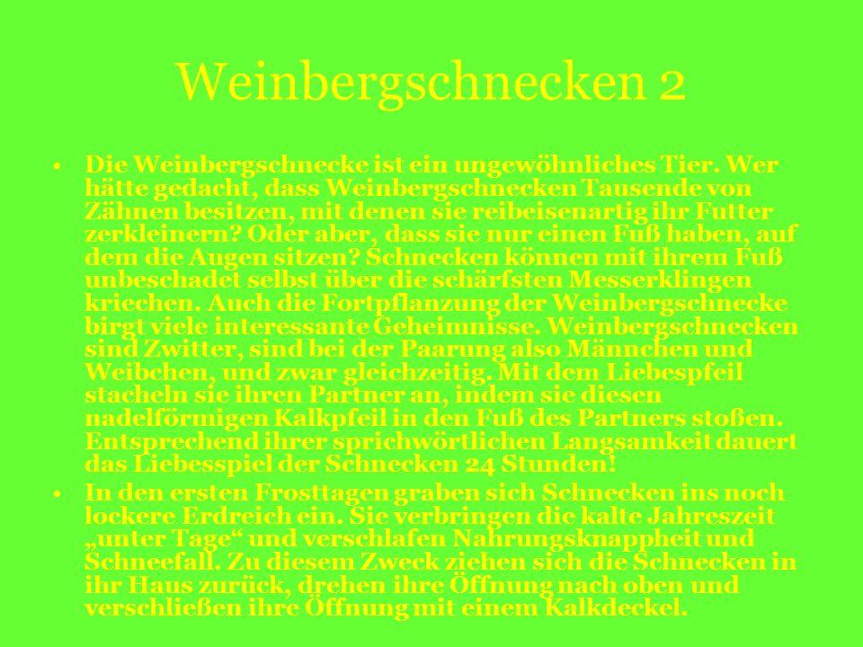 Weinbergschnecken 2