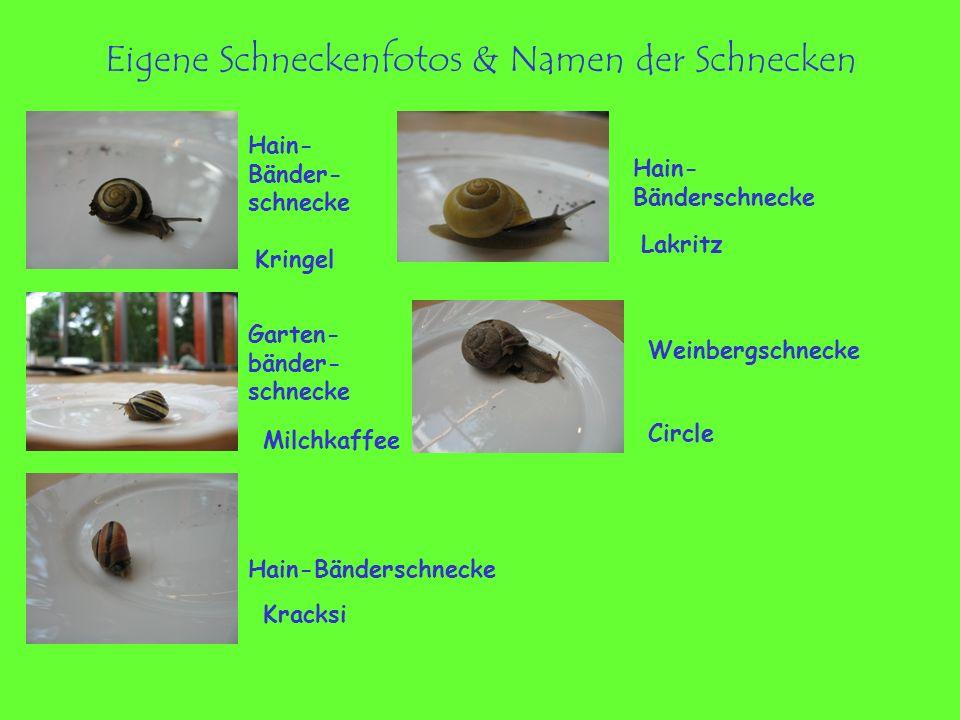 Eigene Schneckenfotos & Namen der Schnecken