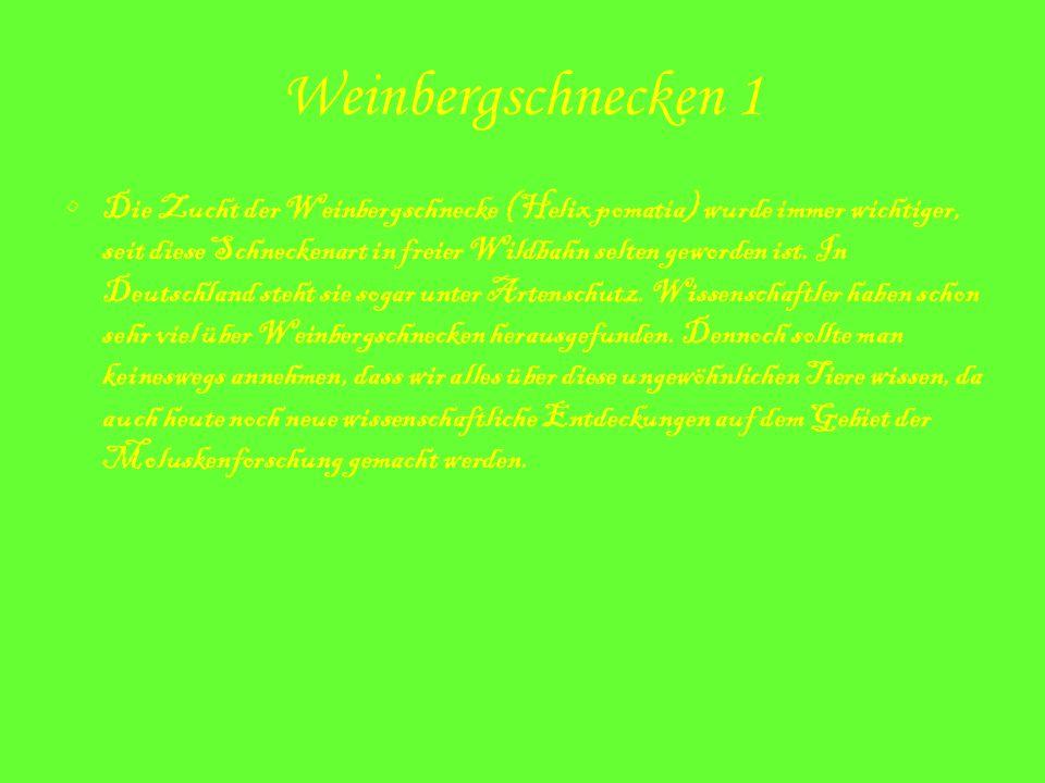 Weinbergschnecken 1