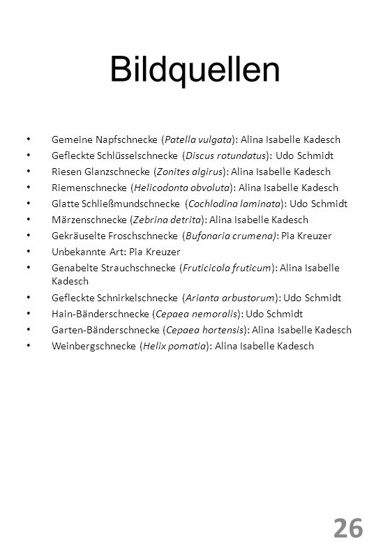 Bildquellen Gemeine Napfschnecke (Patella vulgata): Alina Isabelle Kadesch. Gefleckte Schlüsselschnecke (Discus rotundatus): Udo Schmidt.