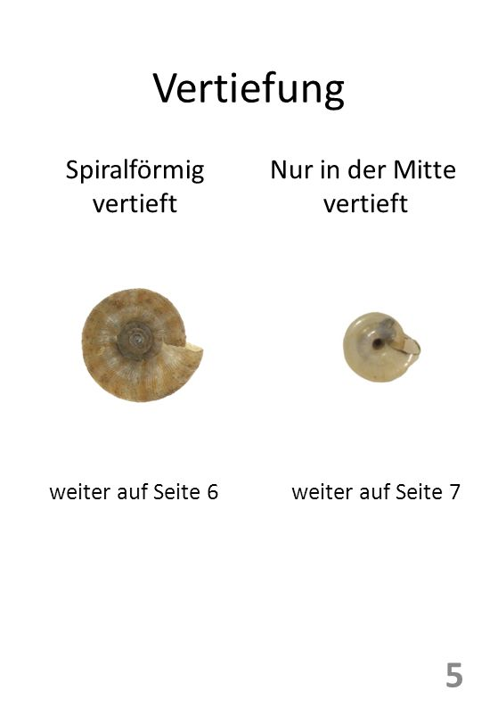 Vertiefung Spiralförmig vertieft Nur in der Mitte vertieft