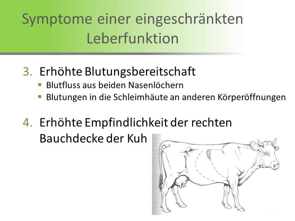 Symptome einer eingeschränkten Leberfunktion