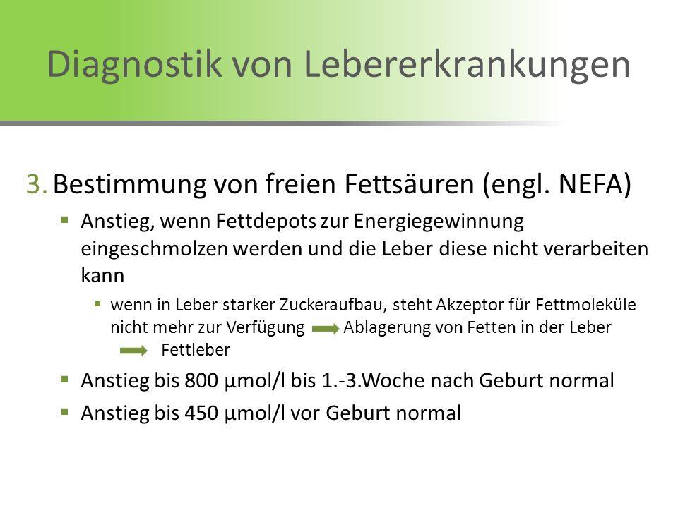 Diagnostik von Lebererkrankungen