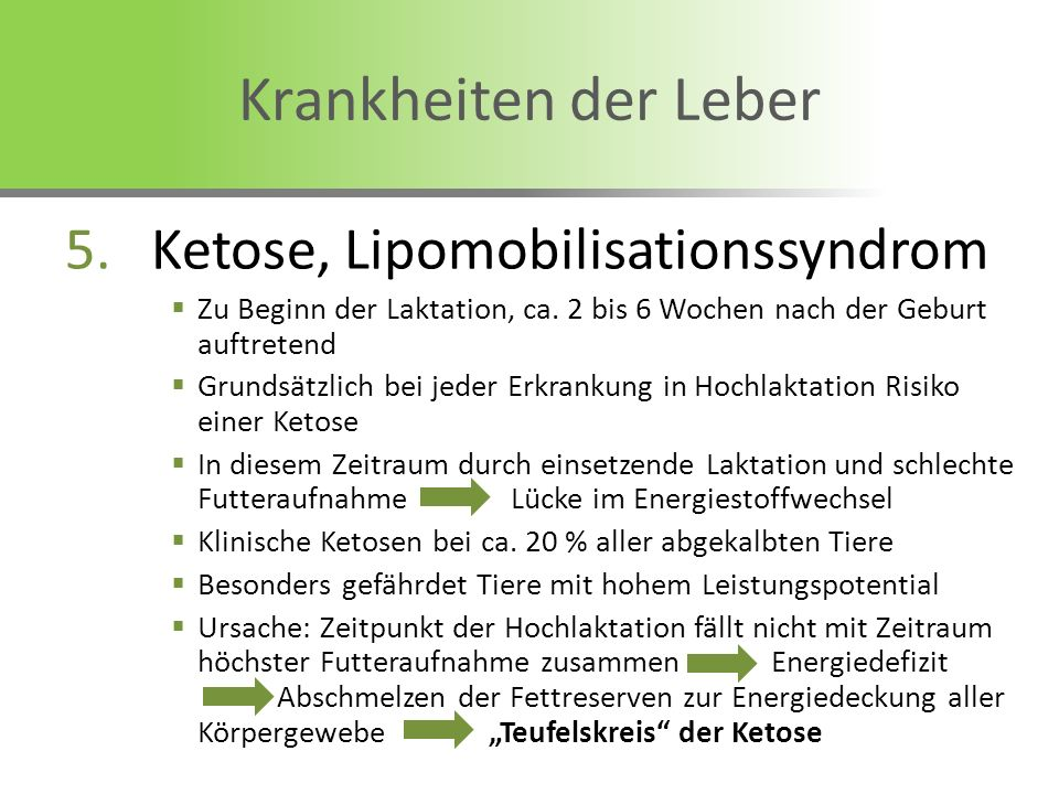 Krankheiten der Leber Ketose, Lipomobilisationssyndrom