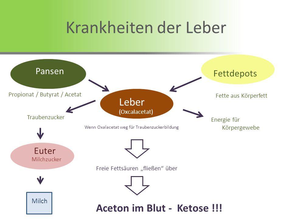 Krankheiten der Leber Leber Aceton im Blut - Ketose !!! Pansen Pansen
