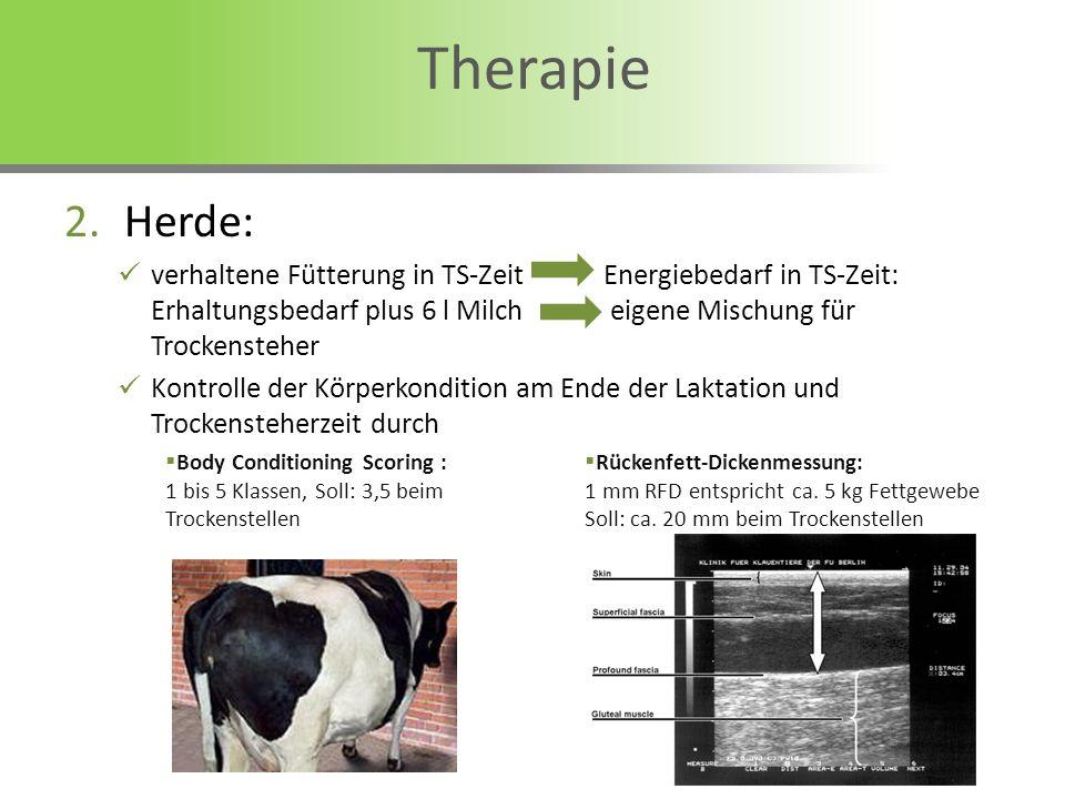 Therapie Herde: