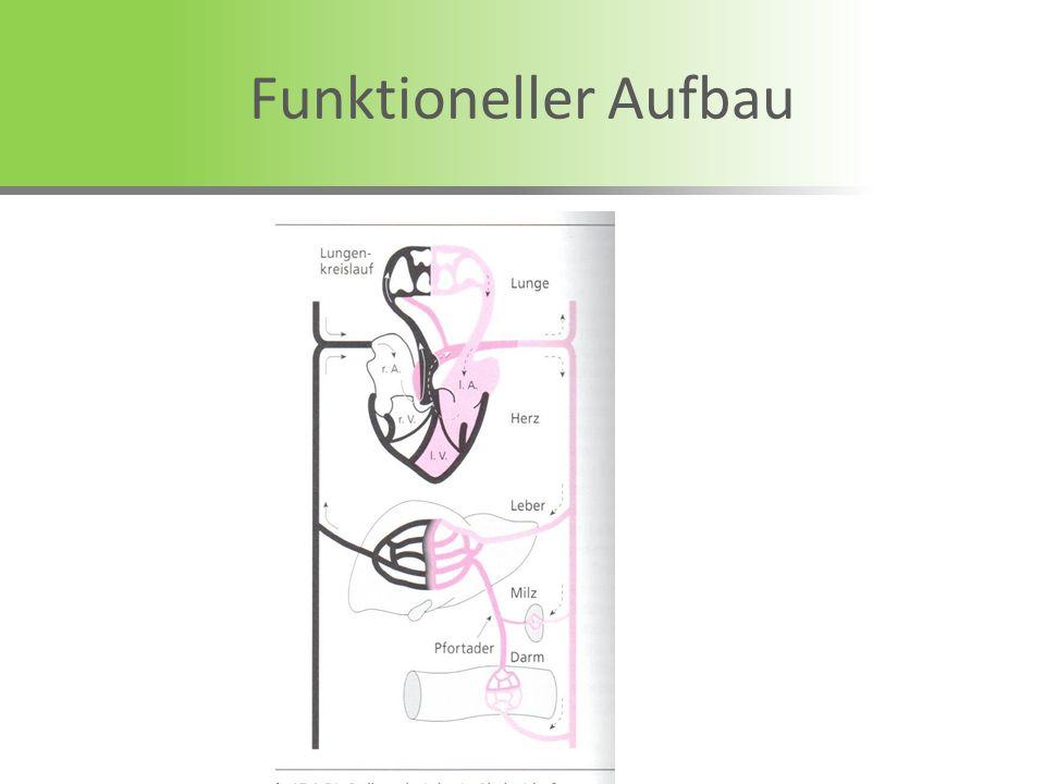 Funktioneller Aufbau
