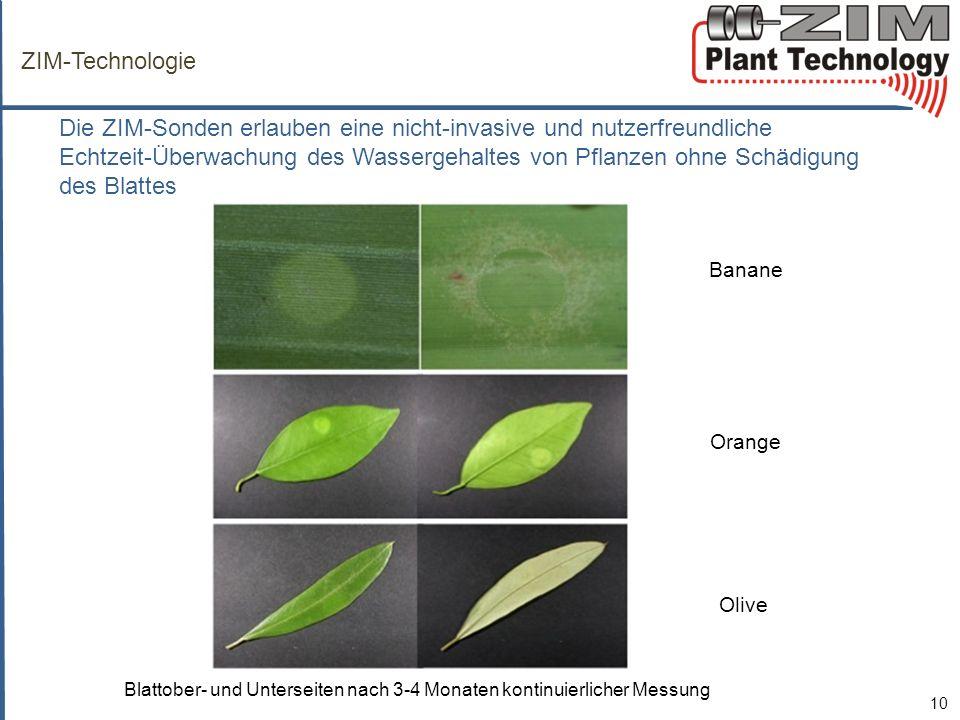 Blattober- und Unterseiten nach 3-4 Monaten kontinuierlicher Messung