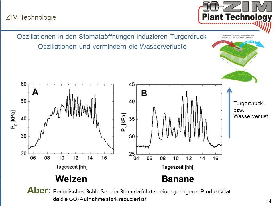 Weizen Banane ZIM-Technologie