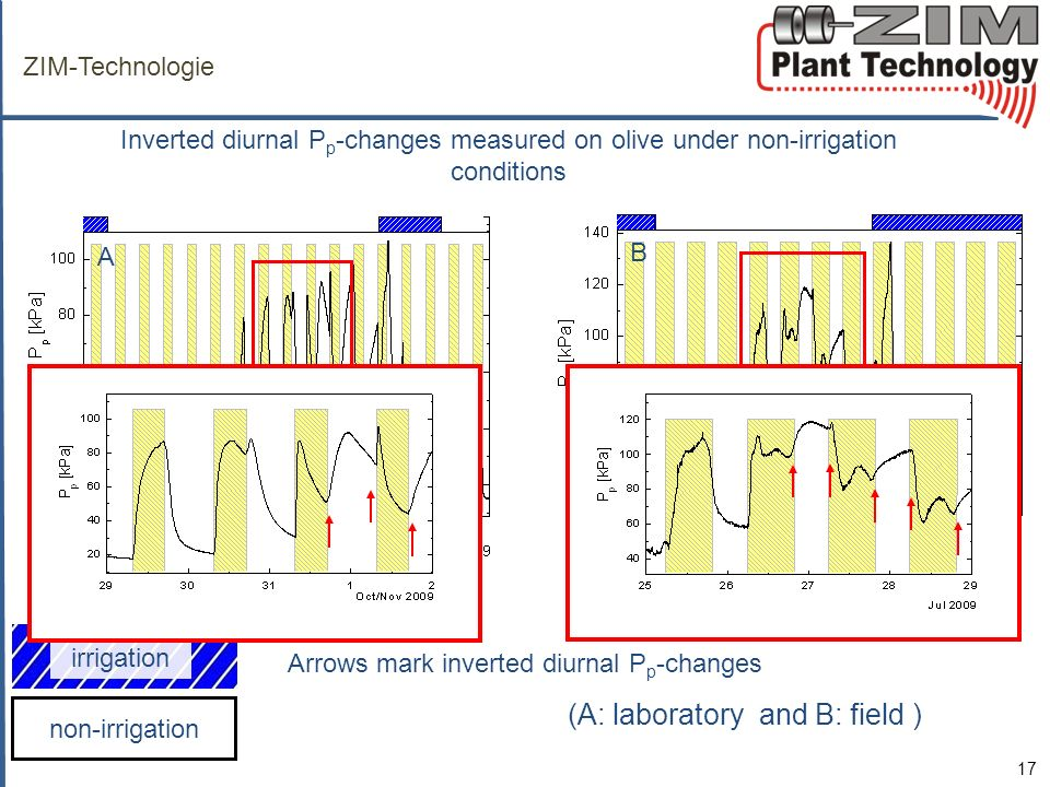ZIM-Technologie Inverted diurnal Pp-changes measured on olive under non-irrigation conditions. A. B.